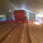 poultry-farming-straw