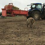 farm-straw